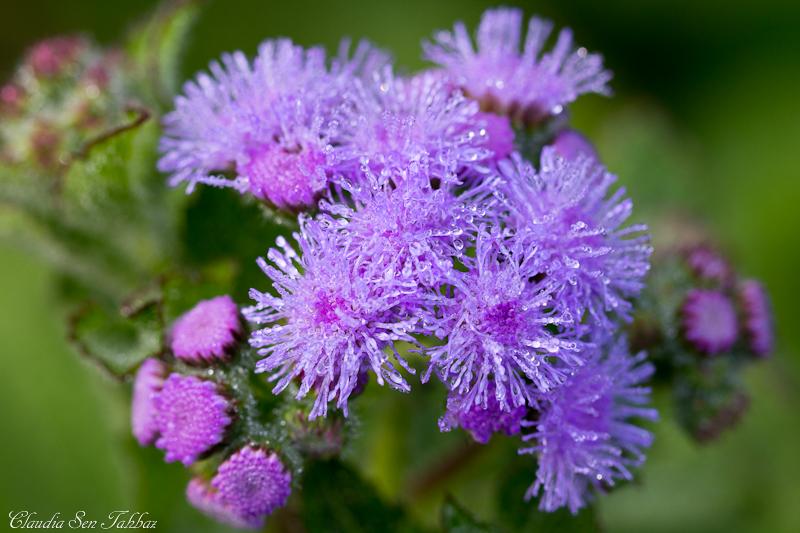 Purple Flowers Fall