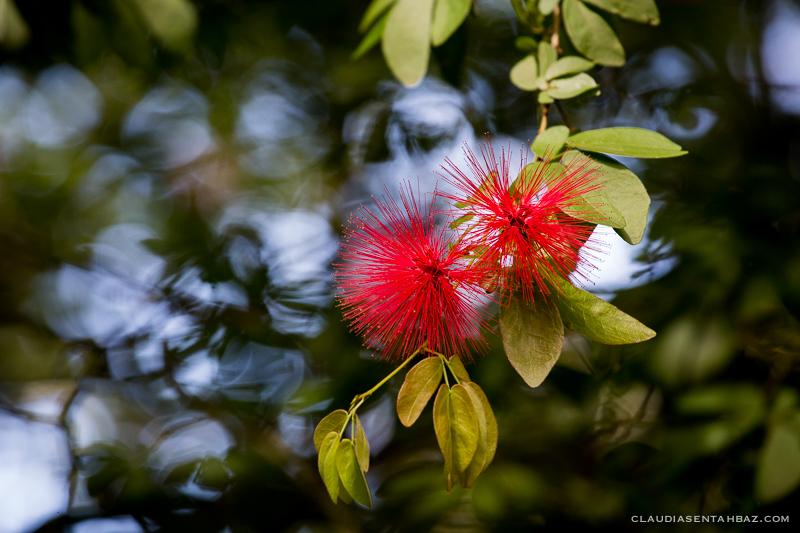 20151022-3B8A5081-Waimea Valley