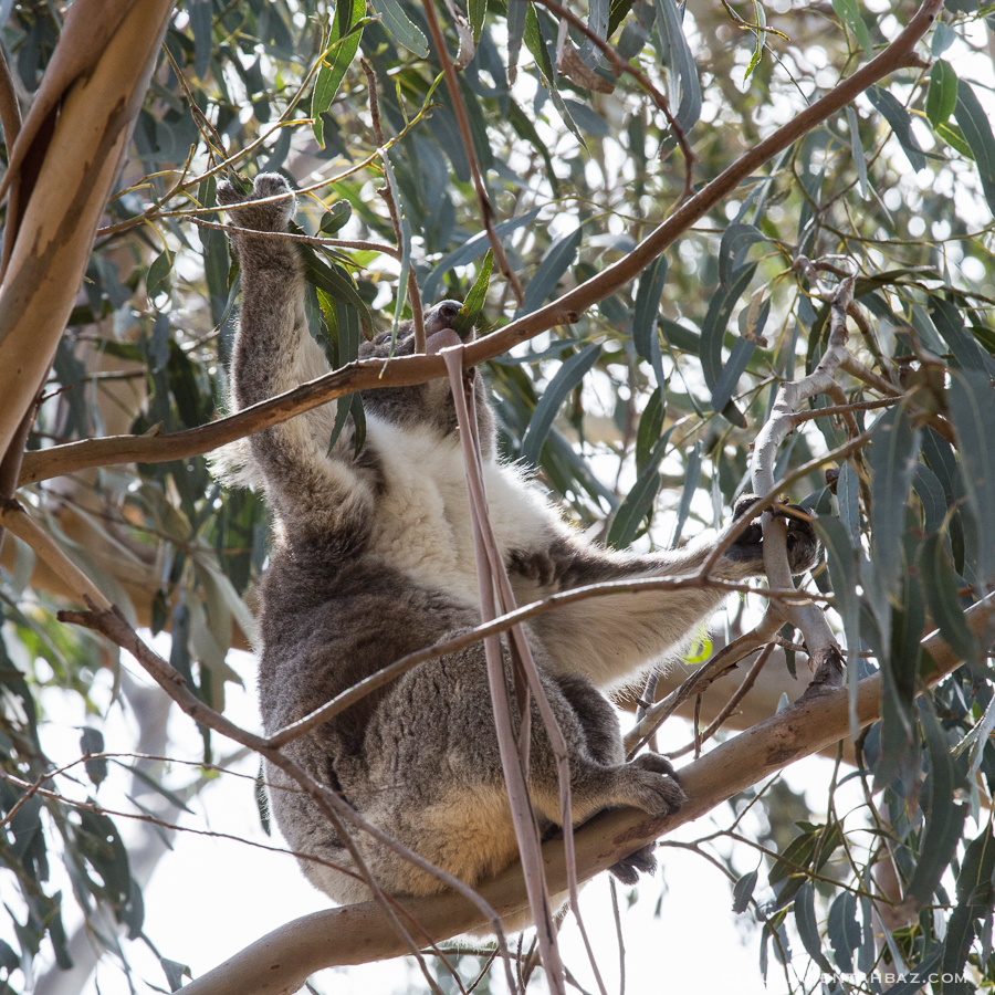 20161017-3B8A2854-KangarooIsland4