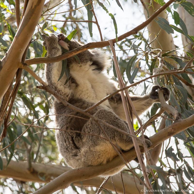 20161017-3B8A2856-KangarooIsland4