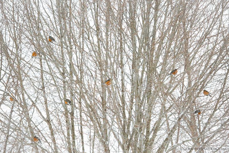 20160215-3B8A5878-winter birds