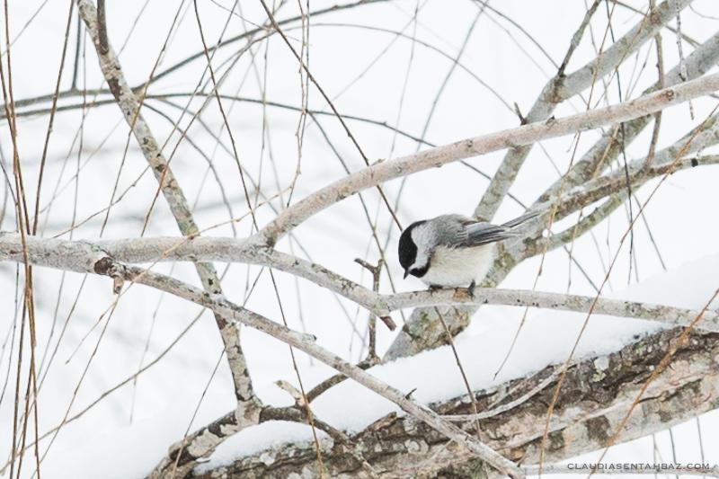 20160215-3B8A5899-winter birds