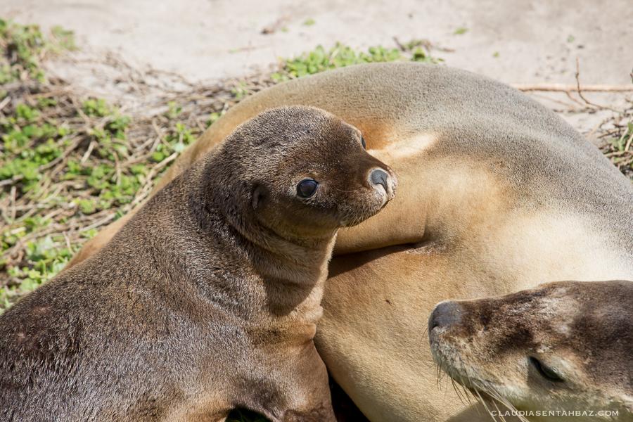 20161017-3B8A2730-KangarooIsland1