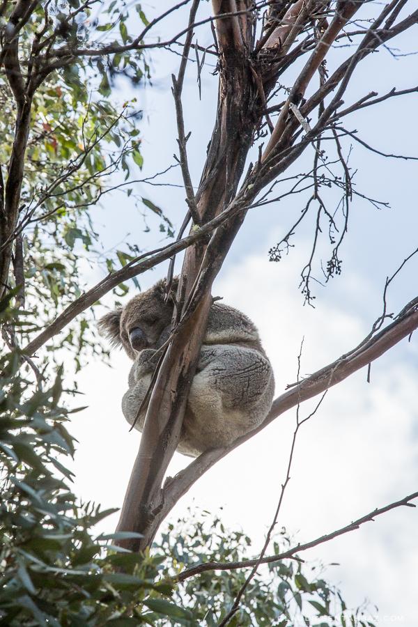 20161018-3B8A3044-KangarooIsland9