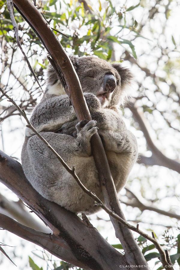 20161018-3B8A3055-KangarooIsland9