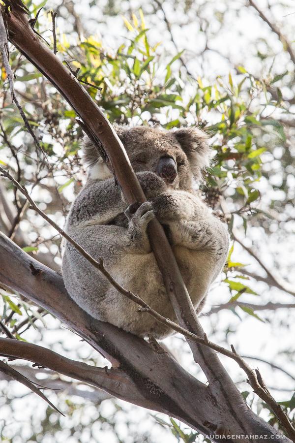 20161018-3B8A3057-KangarooIsland9
