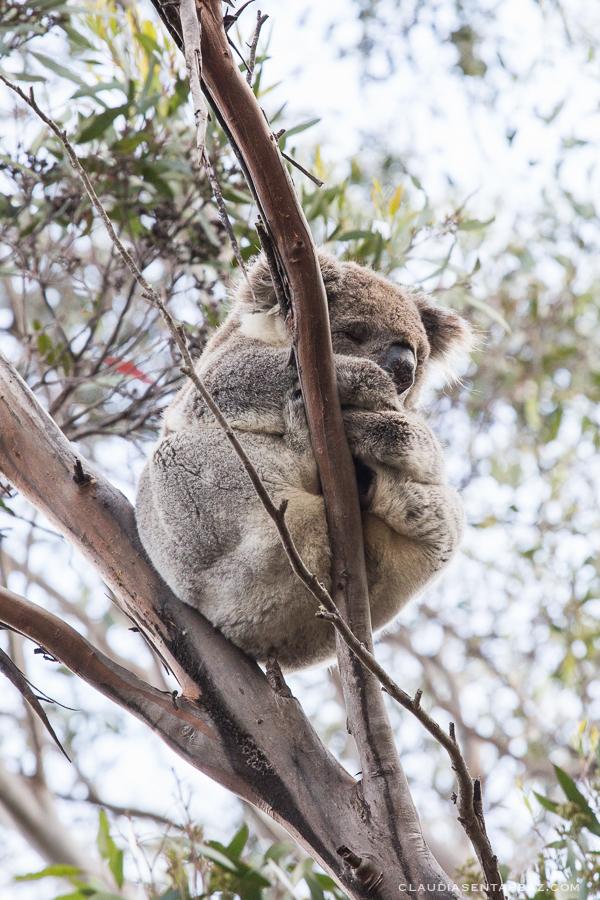 20161018-3B8A3081-KangarooIsland9