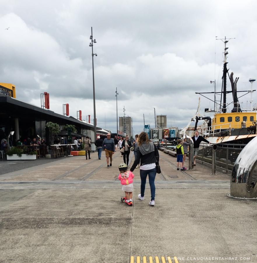 20161024-IMG_0532-NZcel